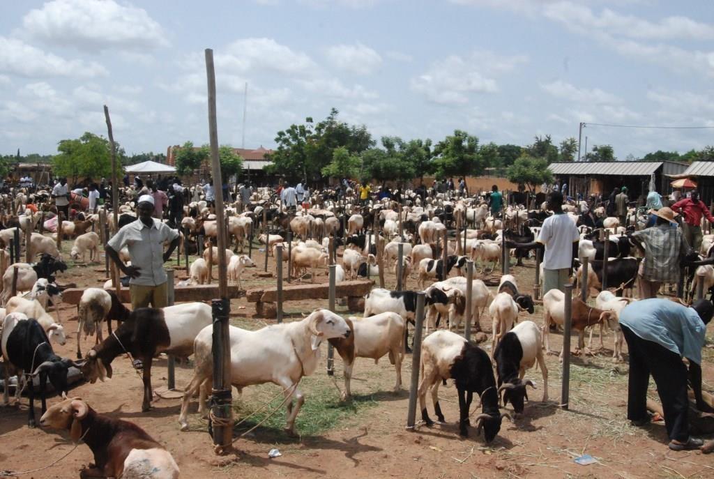 La crise ne permet pas à tout le monde de s'acheter un mouton