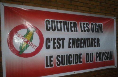 Article : Culture du coton OGM, il faut bouter Monsanto hors du Burkina
