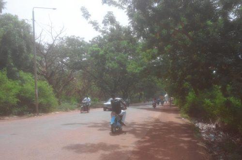 Article : Ouagadougou : 2500 arbres contre du goudron