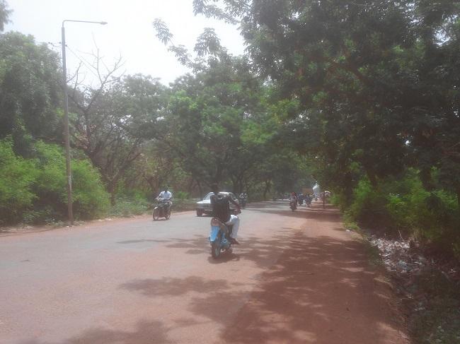 Le goudron va remplacer des arbres sur cette avenue